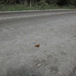 Ремонт дороги Воткинк-Кельчина с помощью ДорЦем